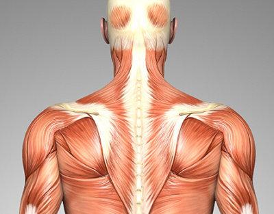 Anatomie des Rückens - Aufbau & Zusammenhang des Rückens